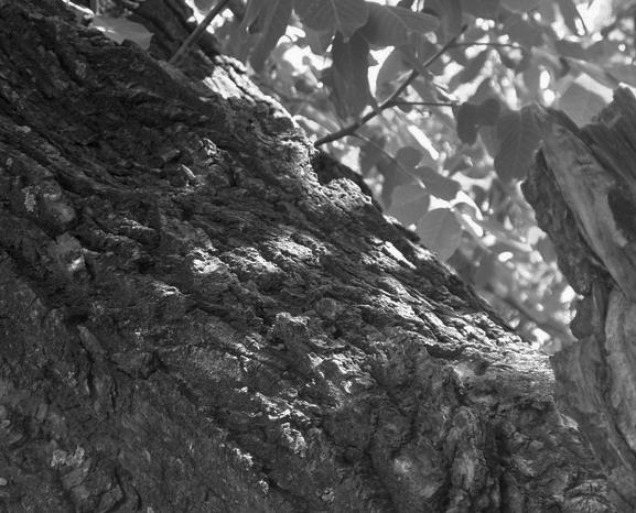 2016-6-25 乐水行之16季-27  高温下的美景 - stew tiger - 乐水行的风斗