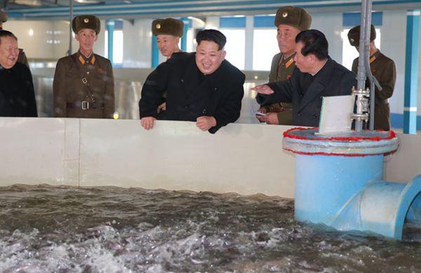 最高司令官与鲶鱼的亲密接触 - 林海东 - 林海东的博客