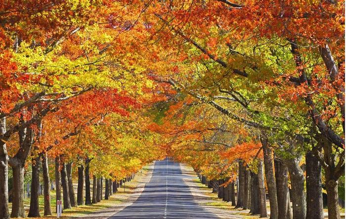 秋天适宜哪些健身运动