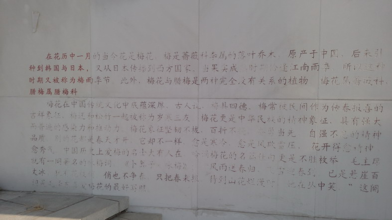 2016-12-10 乐水行之16季-53 干渠变形中 - stew tiger - 乐水行的风斗