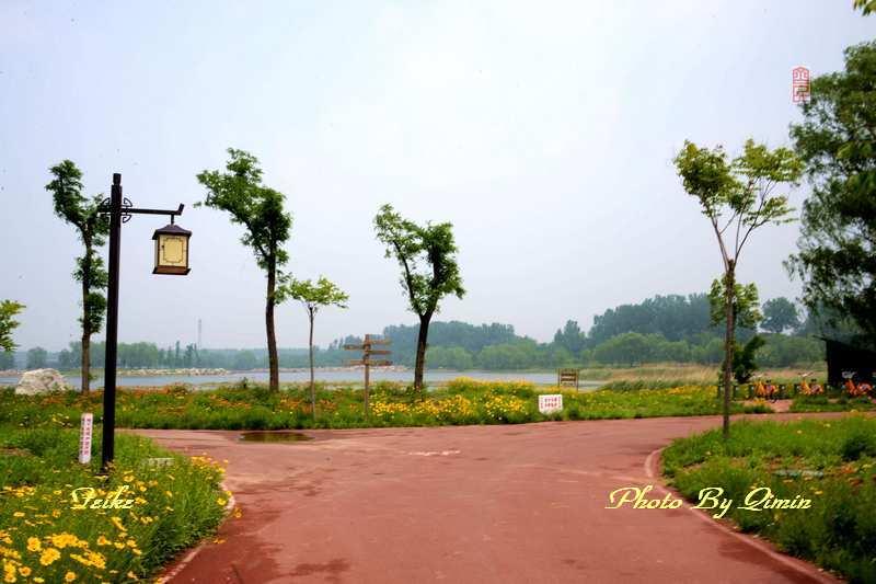 【原创影记】印象弥河湿地公园3: 倩丽骑道 - 古藤新枝 - 古藤的博客