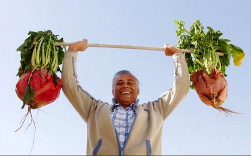 骡性变态蔬菜特供转基因人类品尝? - 追真求恒 - 我的博客