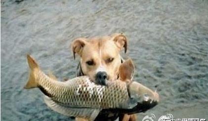 看了让你心酸的历史真相 - 捕鱼者 - 观世间百态 享快乐人生