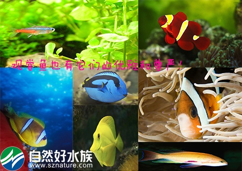 观赏鱼种类图片大全及名称