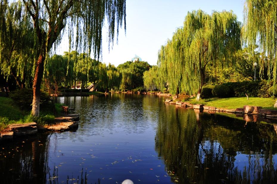 宁波的大学排名_镜头里的浙江:宁波月湖-搜狐旅游