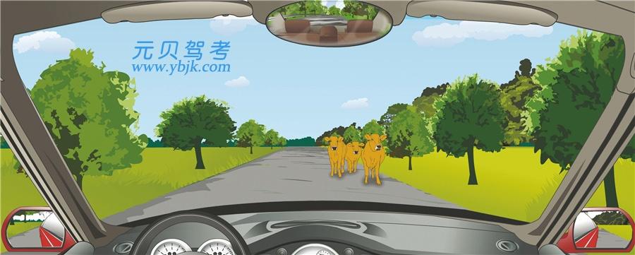 駕駛機動車在這樣的路段要注意觀察,隨時避讓橫過道路的動物。答案是對