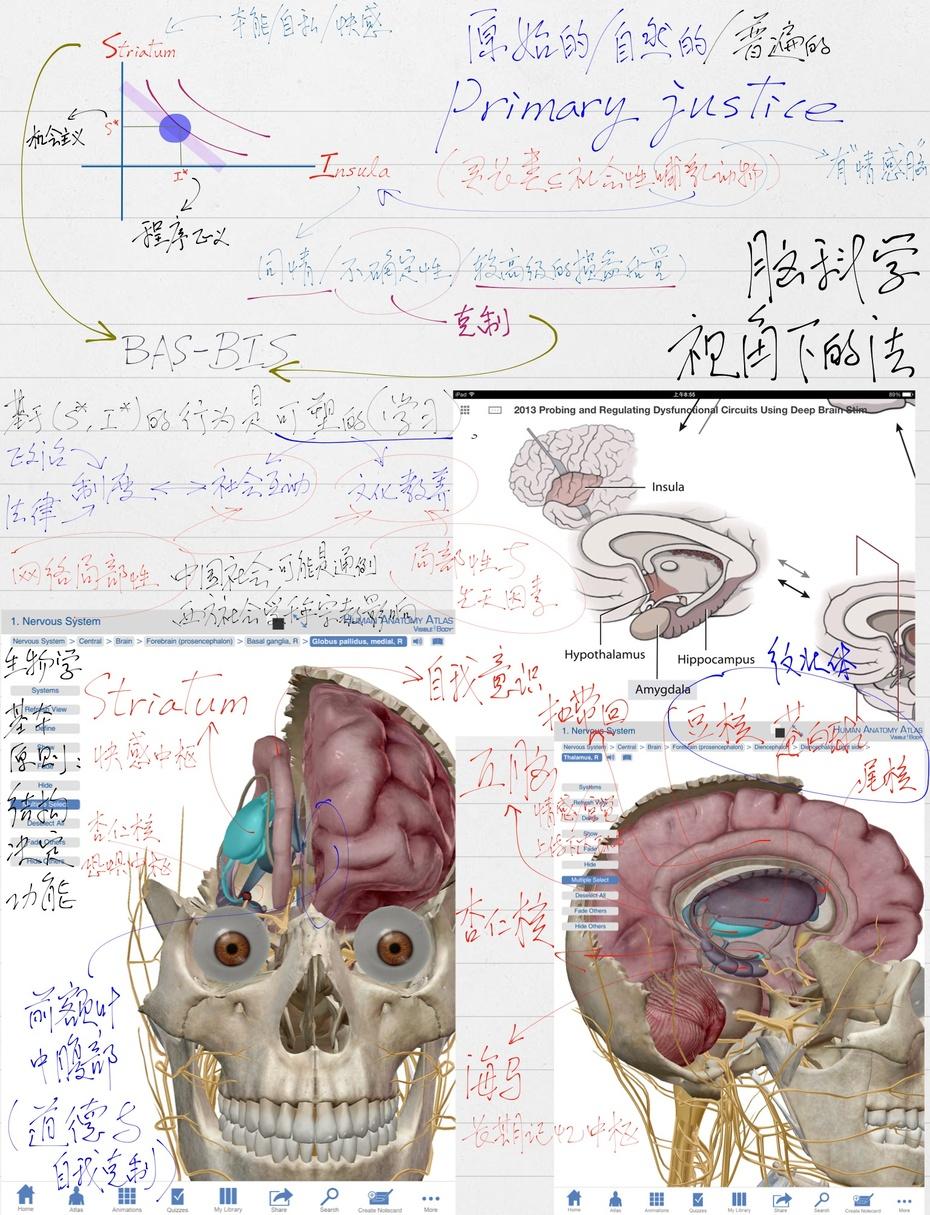 脑科学视角下的法 我在中山大学法学院12月14日周六讲演题目 - 汪丁丁 - 汪丁丁的博客